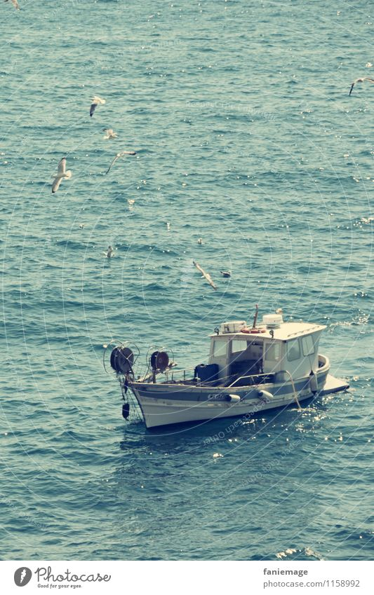 Nature White Environment Watercraft Waves Authentic Mediterranean Seagull To feed Fishing (Angle) Mediterranean sea Fishery Flock Fishing boat Swell To swing