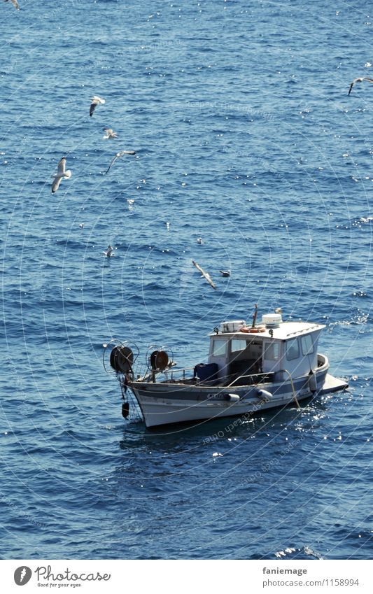 Nature Blue White Water Ocean Landscape Black Environment Gray Flying Fresh Waves Wind Beautiful weather Seagull Fishing (Angle)