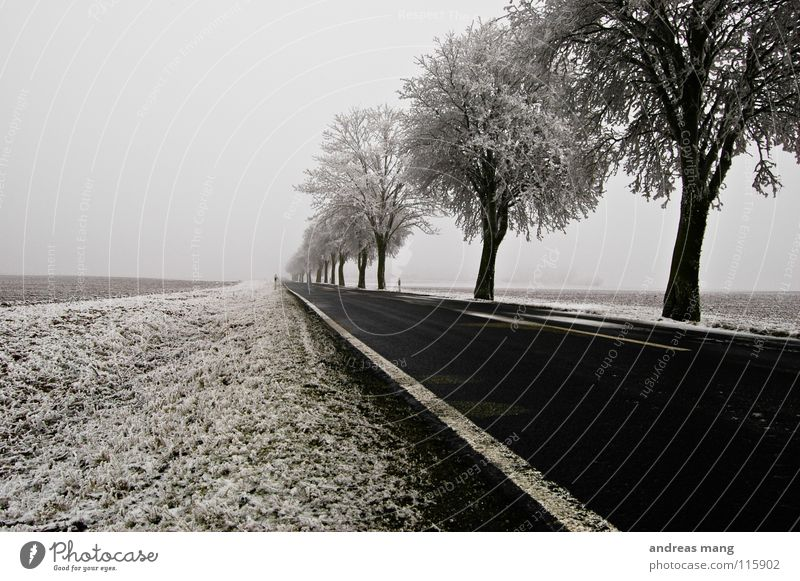The way into the unknown Winter Tree Field Curb Stripe Hoar frost White Far-off places Cold Gloomy Ice Street road trees Snow