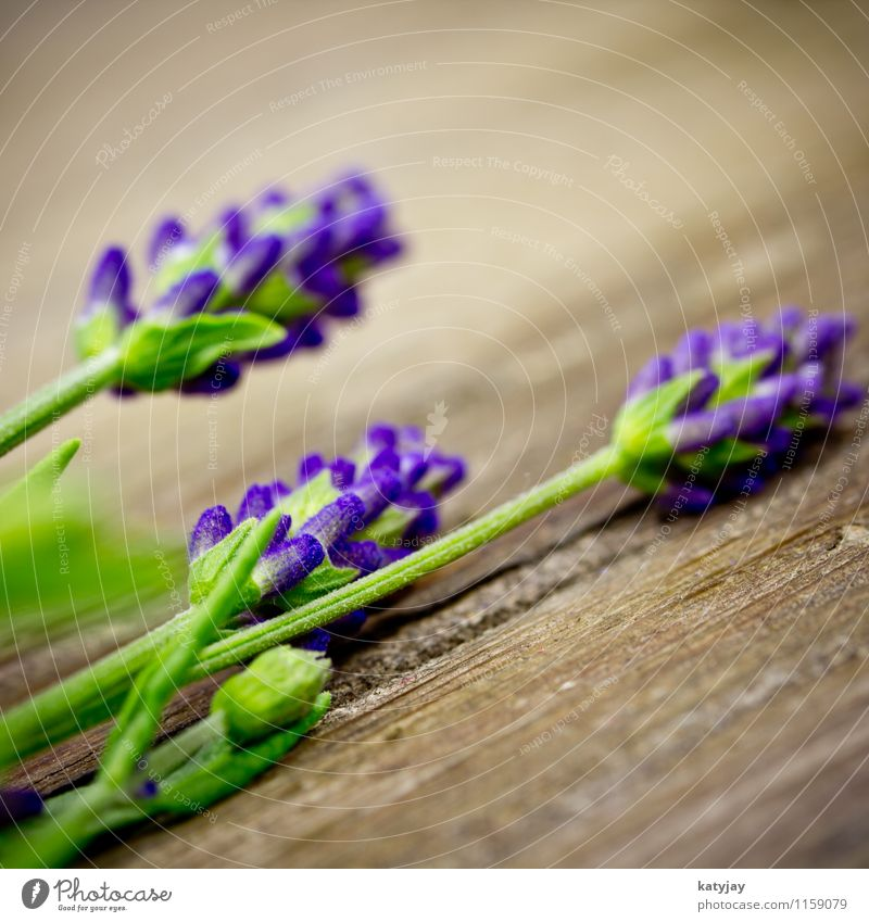 lavender Lavender Flower Bouquet Herbs and spices Bundle Blossom Relaxation Lilac segregated Seasons Violet Macro (Extreme close-up) Medication Nature Plant