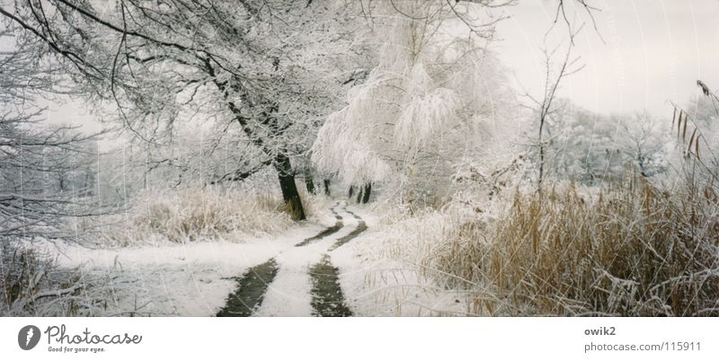 Sky Nature Tree Plant Winter Clouds Landscape Far-off places Environment Cold Snow Lanes & trails Ice Park Earth Weather