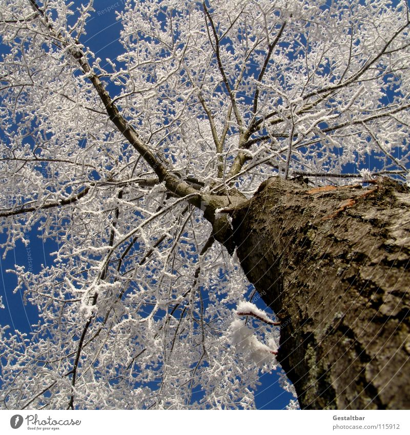 Beautiful Sky White Tree Winter Lamp Cold Snow Ice Glittering Beginning Frost End Transience Seasons Tree trunk
