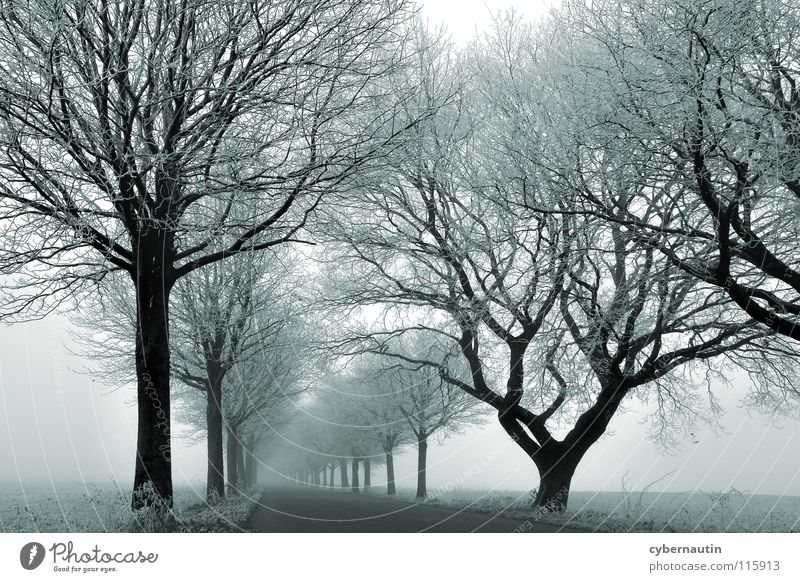 nebulous Avenue Tree Winter Cold Hoar frost Fog Weather Branch Street Frost Ice Snow