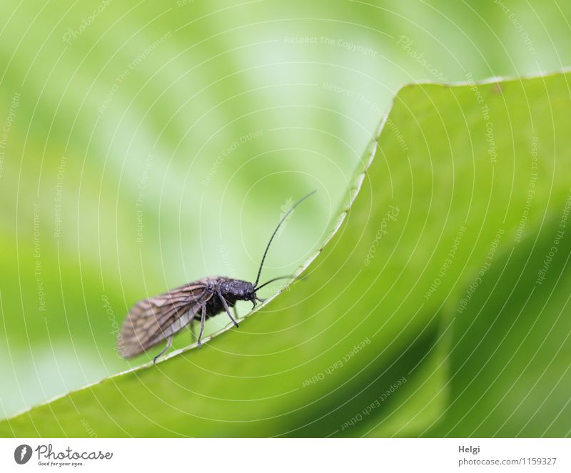 Nature Plant Green Leaf Animal Environment Life Spring Natural Small Brown Park Growth Fly Stand Esthetic