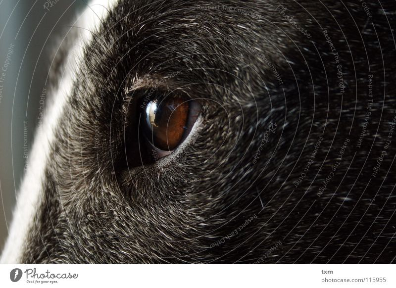 What are you looking at? Dog Mastiff Cow Black White Vessel Reflection Near Brown Gray Hedgehog Mammal Nora bull terrier marco Barn Hair and hairstyles Old