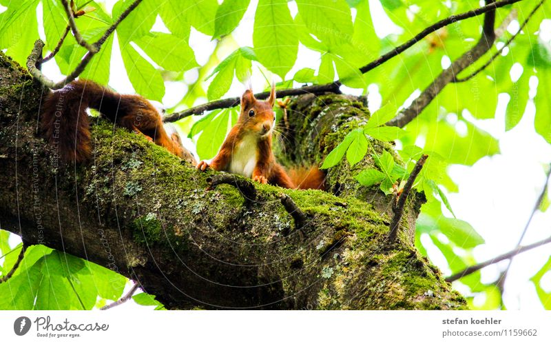 squirrels Trip Nature Spring Beautiful weather Tree Forest Animal Wild animal 2 Pair of animals Observe Looking Friendliness Happy Small Cute Positive Brown