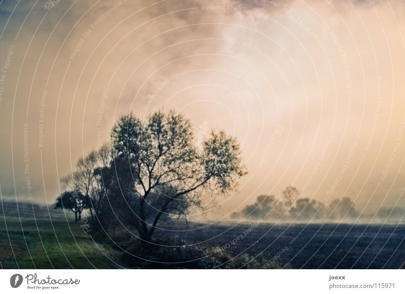 Sky Tree Calm Relaxation Landscape Autumn Sadness Think Dream Moody Power Fog Arrangement To go for a walk Romance Idyll