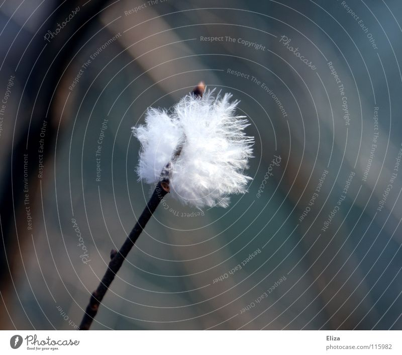 cotton ball Soft Delicate White Tiny hair Easy Hover Animal Cuddly Macro (Extreme close-up) Close-up Bird Feather Branch Wind Twig Detail Nature