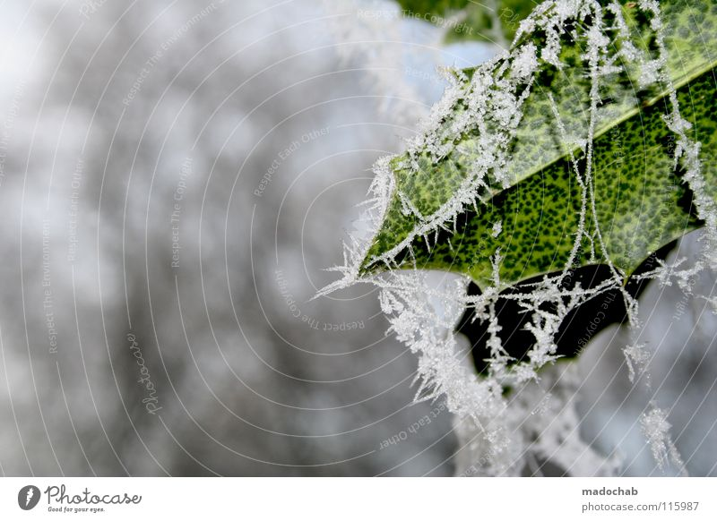 Nature White Green Beautiful Leaf Winter Animal Cold Snow Moody Cool (slang) Frost Frozen Freeze Botany Crystal structure