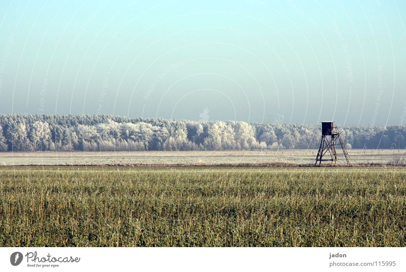 beginning of winter Winter Field Forest Hoar frost Tree Hunting Blind Cold Panorama (View) Calm Brandenburg Sky Frost Beautiful weather Far-off places Snow