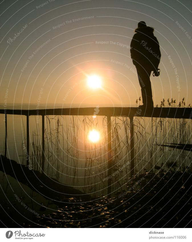 Man Sun Winter Cold Relaxation Dream Lake Wait Planning Common Reed Footbridge Guy Bavaria Stay Forget Inspiration