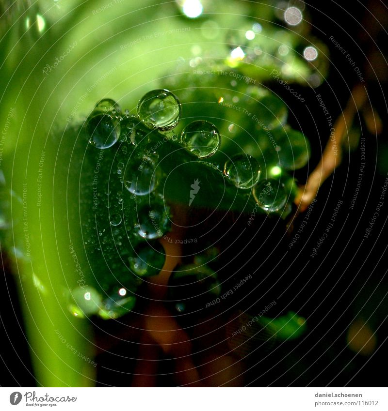 Dew drops 1 Drops of water Clarity Fresh Clean Pure Leaf Green Glittering Light Morning Grass Transparent Background picture Meadow Macro (Extreme close-up)