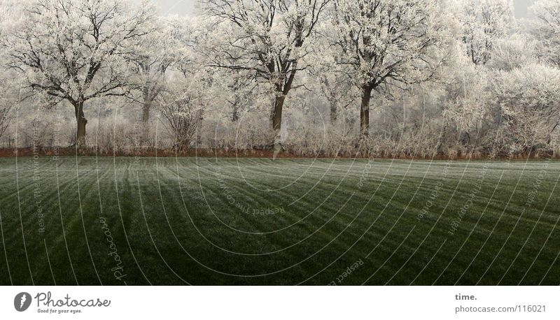 Everywhere icing sugar, Lukas is happy Winter Snow Ice Frost Tree Grass Bushes Meadow Field Green Power Contentment Environment Transience Growth Tree trunk