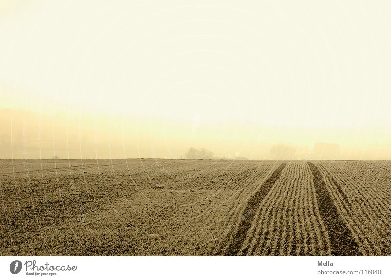 Winter Cold Snow Work and employment Ice Bright Field Fog Fresh Frost Tracks Agriculture Americas Frozen Freeze Furrow