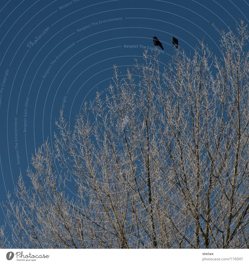friendship Winter Tree Raven birds Black Cold Longing Bird Crow Hoar frost Sky Snow