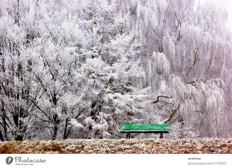 resting place Winter Tree Calm Green Forest Park bench Cold Ice house Frost Bench Landscape Nature Snow