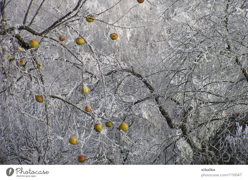 Nature Tree Winter Colour Forest Cold Snow Garden Park Ice Environment Time Growth Frost Round Change