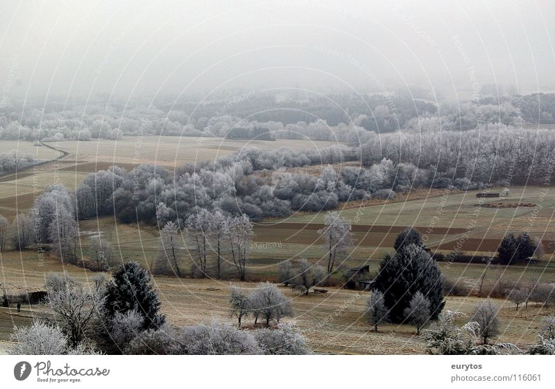 Powdered sugar?! Winter Cold Hoar frost Frozen Meadow Field Tree Panorama (View) Confectioner`s sugar Fog White Bushes Snow Frost Pasture Landscape
