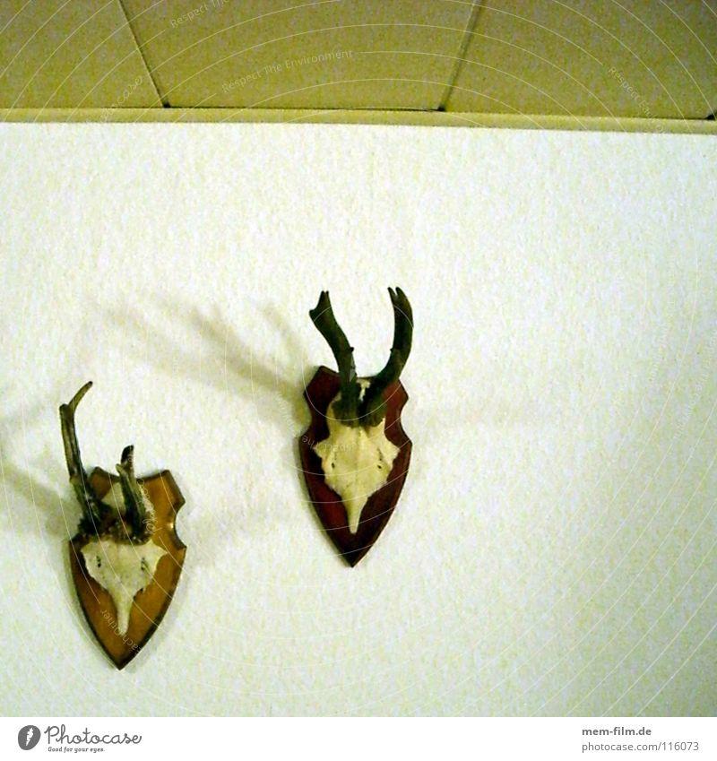 Animal Death Environment Brown Decoration Hunting Antlers Disgust Mammal Deer Skeleton Roe deer Hunter Death's head Paddle Rutting season