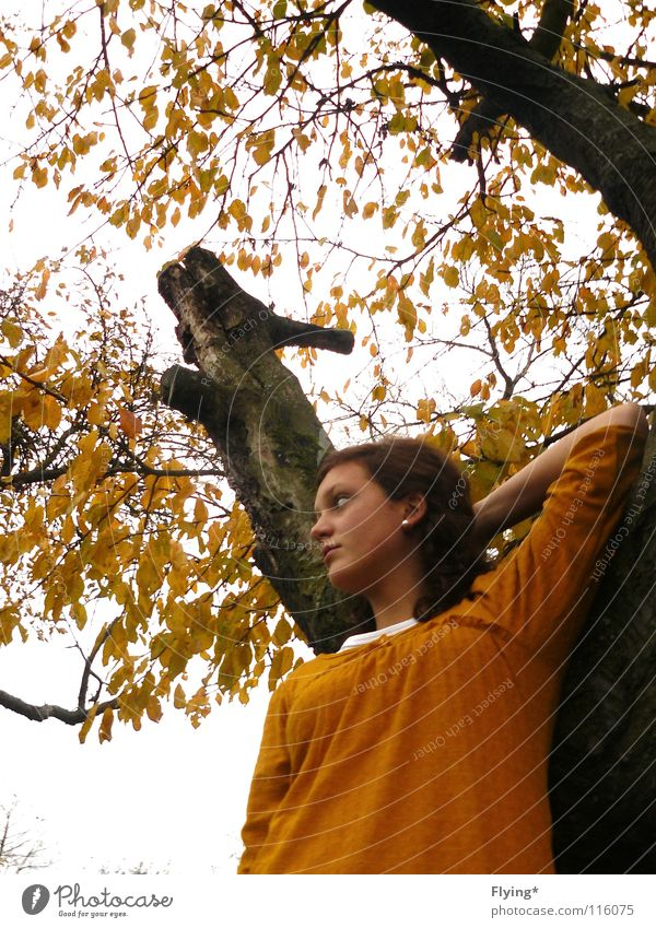Woman Sky Tree Leaf Yellow Autumn Posture Branch Tree trunk Curl Branchage Autumnal
