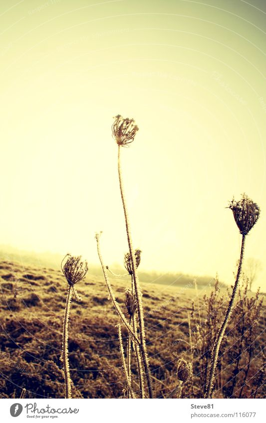 Flower Winter Life Cold Meadow Death Field Dried