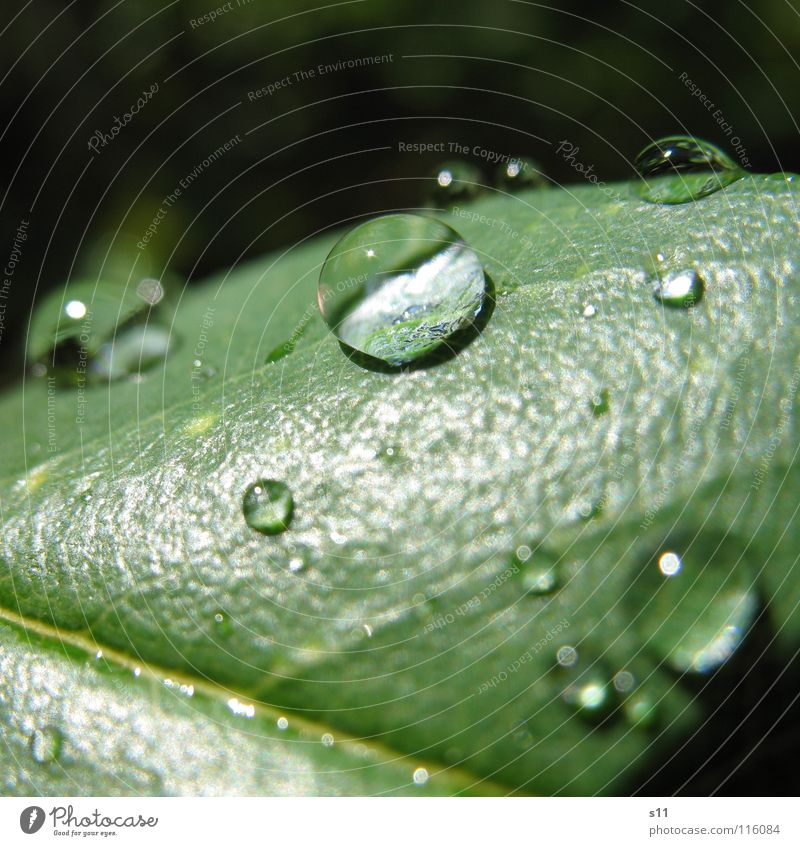 Green Water Power Drops of water Force Concentrate Magnifying glass