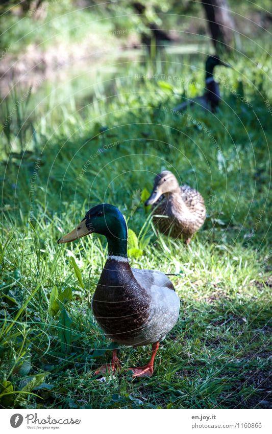 Nature Green Summer Animal Love Spring Meadow Grass Bird Idyll Wild animal Pair of animals Joie de vivre (Vitality) Observe Curiosity Hope