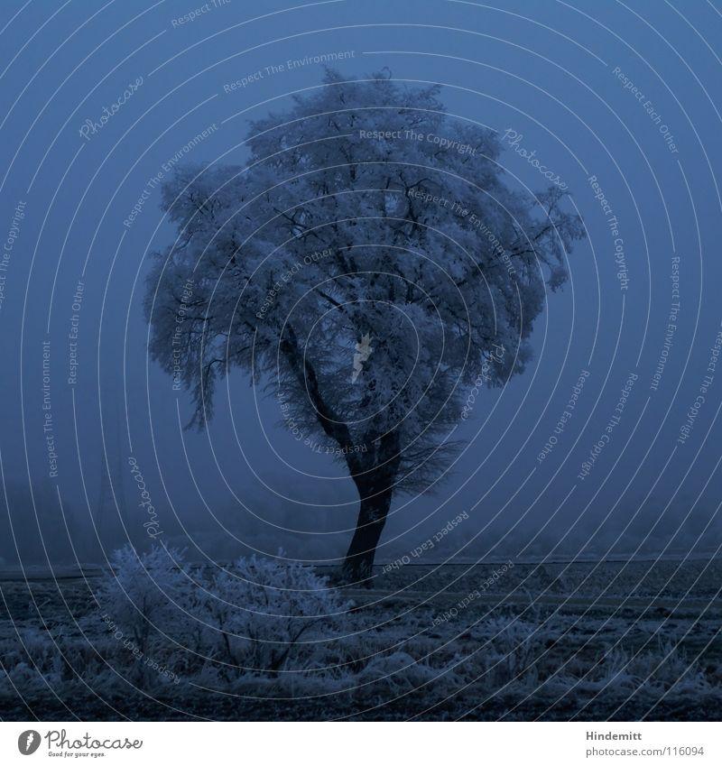 Treestesse Bushes Electricity pylon Tree trunk Night Twilight Field Fog White Black Blue tint Dark Dim Winter Moody Grief Plant Sweet Overlaid Cold