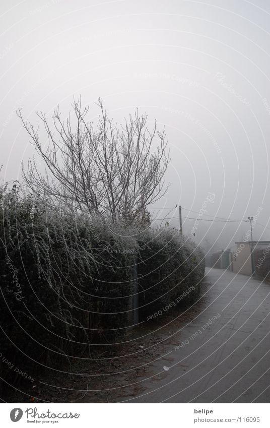 White Tree Winter Loneliness Lanes & trails Fog Frost Branch Cologne Sidewalk Hedge Unclear Hoar frost Garden plot Wire netting fence