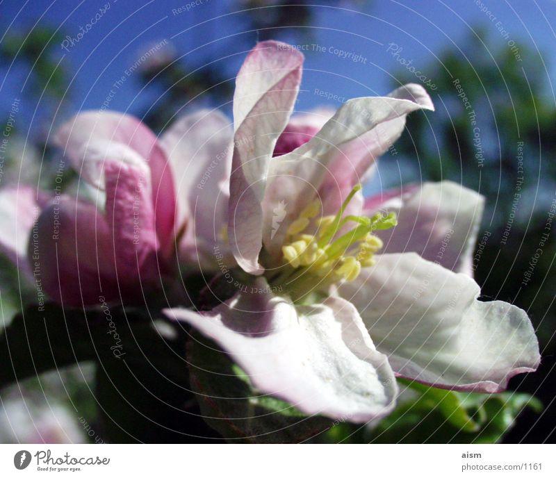 Nature Sun Summer Blossom