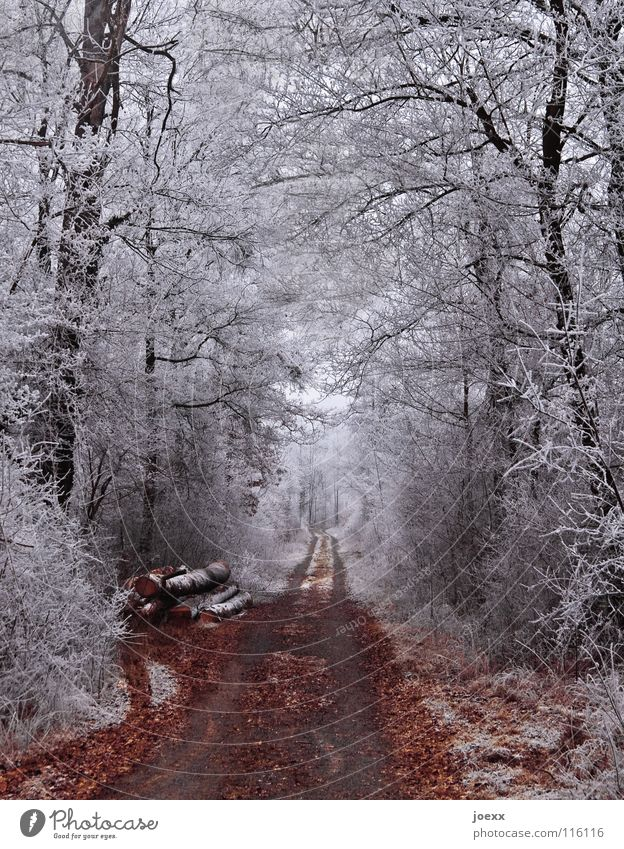 Forest path through white forest in winter with hoarfrost Winter mood Winter forest Winter magic Tree trunk Brown Ice Forest road Right ahead Gray Cold