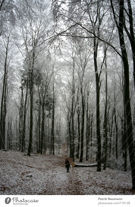Tree Winter Loneliness Forest Landscape Cold Snow Think Air Ice Walking Frost To go for a walk Grief Frozen Anger