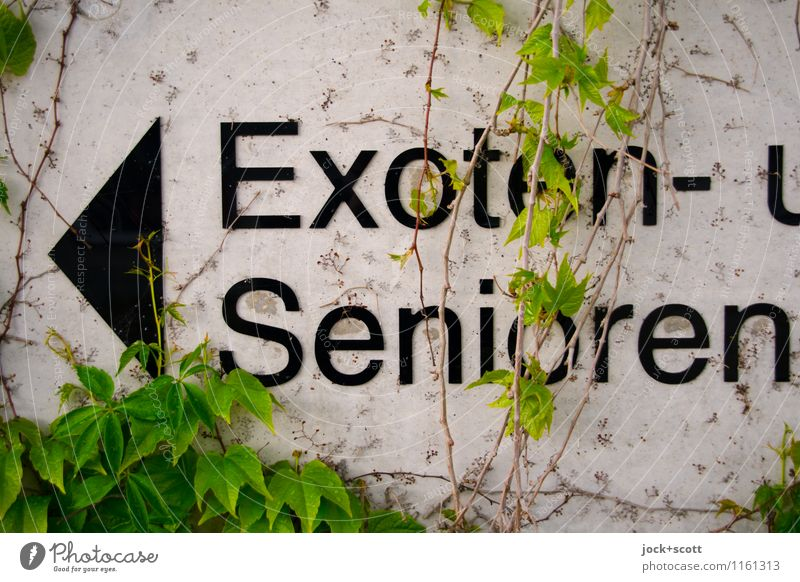 exotic & seniors Typography Creeper Wall (barrier) Wall (building) Concrete Signs and labeling Arrow Wordplay Exotic Senior citizen Left Uniqueness Funny