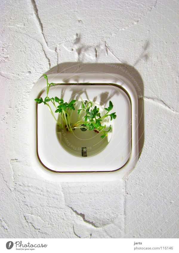 Green Energy industry Electricity Technology Herbs and spices Clean Science & Research Ecological Environmental protection Plant Climate change Socket