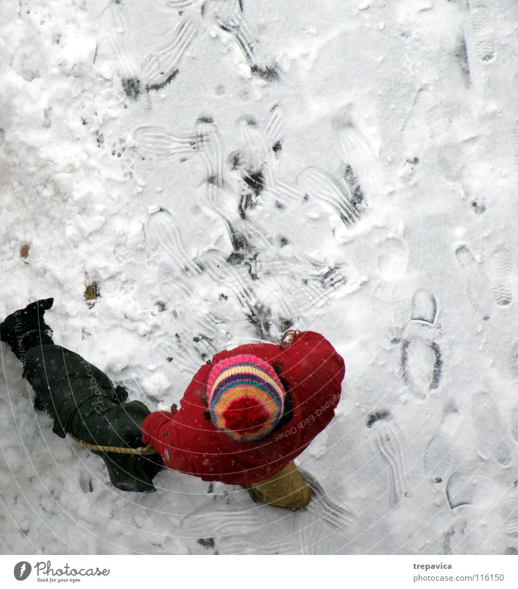 Dog White Red Winter Animal Black Loneliness Cold Snow Freedom 2 Friendship Weather Together Walking Rope