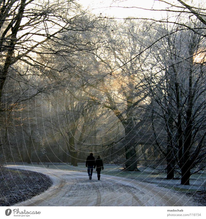 stroll Forest Wood flour Cold Winter To go for a walk Man Woman Masculine Sunday Kitsch Sunset Beautiful Jinxed Dream Fairy tale Going Walking Together To enjoy