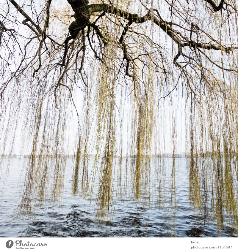 Nature Water Tree Park Idyll Curiosity Lakeside River bank Willow-tree Alster