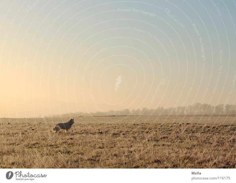 Dog Sky Blue White Animal Loneliness Winter Far-off places Meadow Cold Grass Lanes & trails Air Lighting Ice Orange