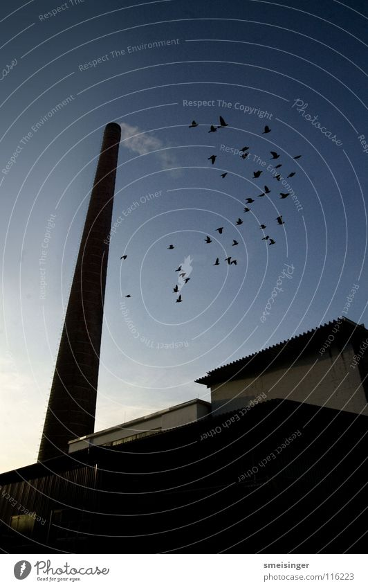industrial romance #9 Chimney Factory Window Bird Wide angle Industry Transience Sky Old Shadow Smoke