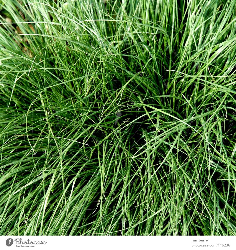 Nature Green Plant Animal Meadow Grass Garden Park Field Growth Floor covering Agriculture Americas Blade of grass