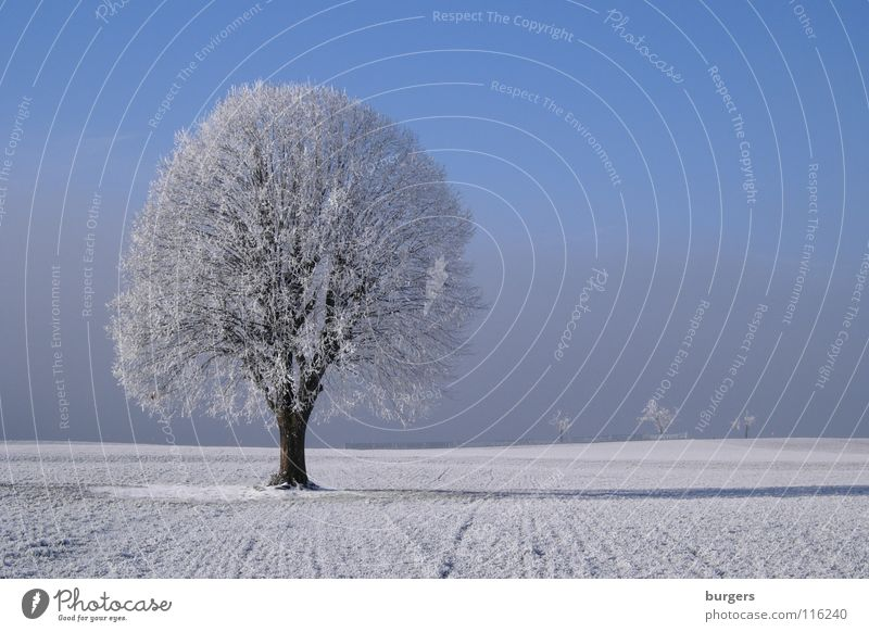 My favourite tree in winter Tree Winter Deciduous tree Hoar frost White Cold Field Meadow Snow Fog Gray Horizon Calm Loneliness Individual Exterior shot Sky