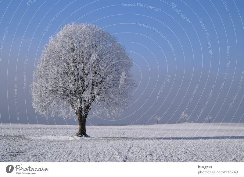 Sky White Tree Blue Winter Calm Loneliness Cold Snow Meadow Gray Landscape Field Fog Horizon Clarity