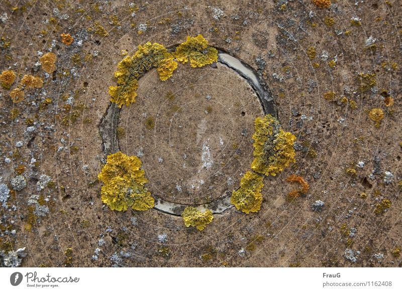 ravages of time Nature Mushroom Algae Circle Concrete Old Round Brown Yellow Relationship Growth Overgrown Weathered pointer organism air quality
