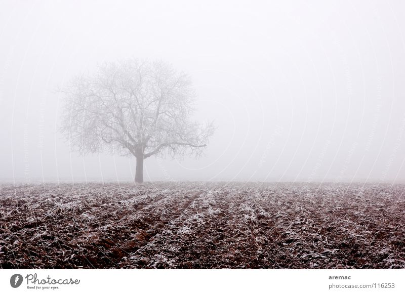 fog tree Fog Tree Field Agriculture Hoar frost Calm Winter Nature Frost Ice Snow