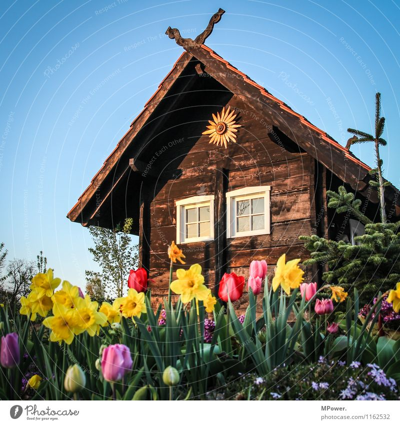hut Cloudless sky Beautiful weather Spring fever Hut Spring flower Sunset Wooden hut Tulip field Blossom Vacation & Travel Colour photo Exterior shot Deserted