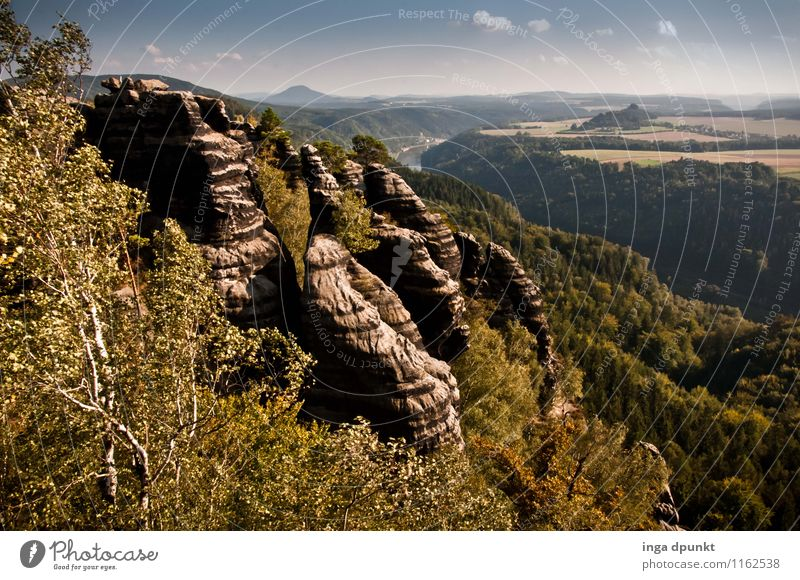 To the side of the Elbe Environment Nature Landscape Plant Elements Summer Beautiful weather Tree Forest Hill Rock Mountain Canyon Saxony Bad Schandau