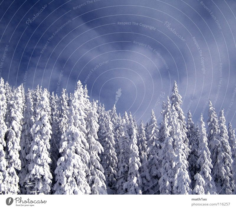 winter forest Winter Forest Tree Wood flour Sky Snow wonder blue white dark contrast trees clouds heaven cold cold blue DarkBlue