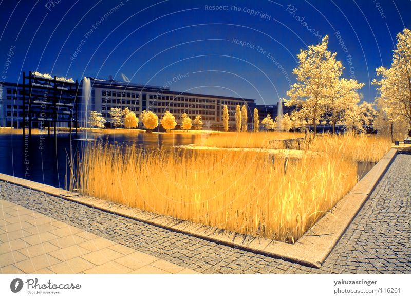 Environment Zone Infrared Infrared color Horizon Yellow Lake Tree Common Reed Future Summer Water fountain Long exposure Sky Blue Placed exhibition lake