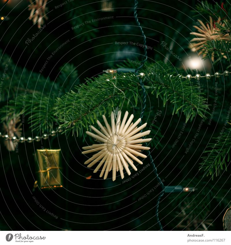 Christmas & Advent Green Tree Winter Decoration Star (Symbol) Kitsch Christmas tree Fir tree Anticipation Glitter Ball Christmas decoration December