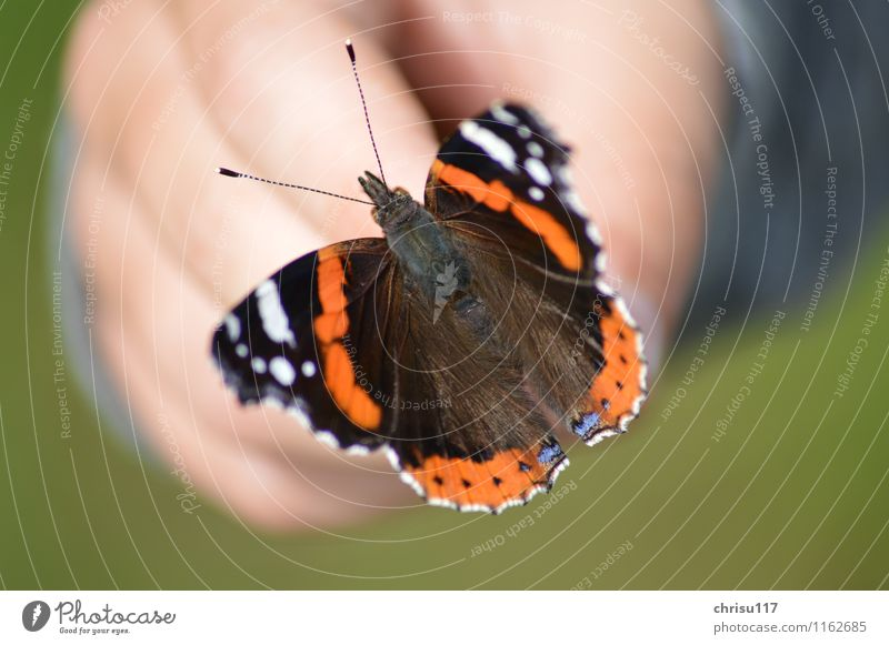 Beauty on the hand Nature Garden Animal Wild animal Butterfly Wing 1 Blue Brown Red Black White Acceptance Beautiful Calm Respect Elegant
